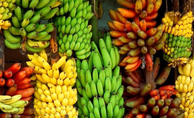 Интересные факты и полезные свойства бананов, как хранить бананы